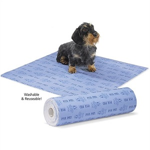 Wire Haired Dachshund on a Pish Pad
